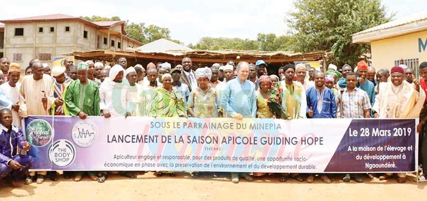 Saison apicole: pour une meilleure qualité du miel camerounais