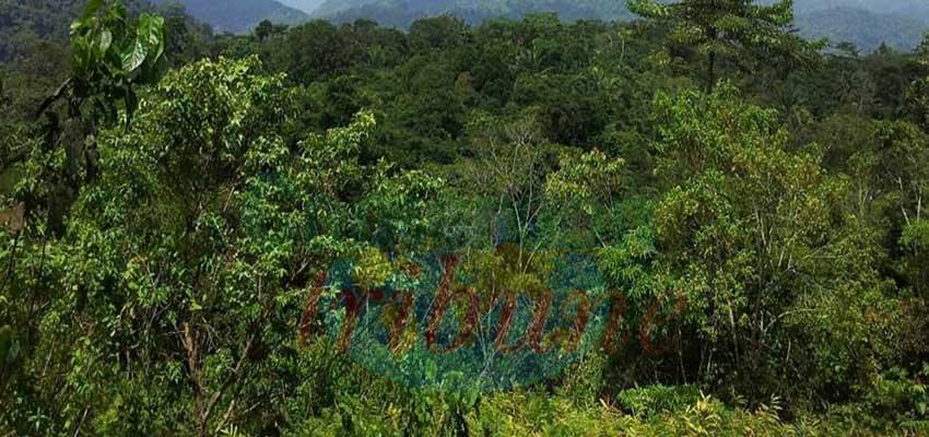 Journée du climat : plaidoyer pour la forêt d'Ebo