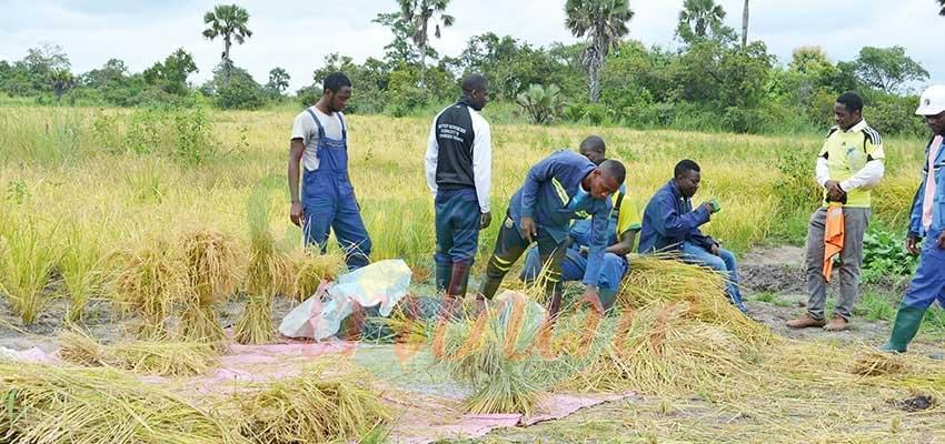 Image : Agriculture de deuxième génération : comment insérer davantage de jeunes