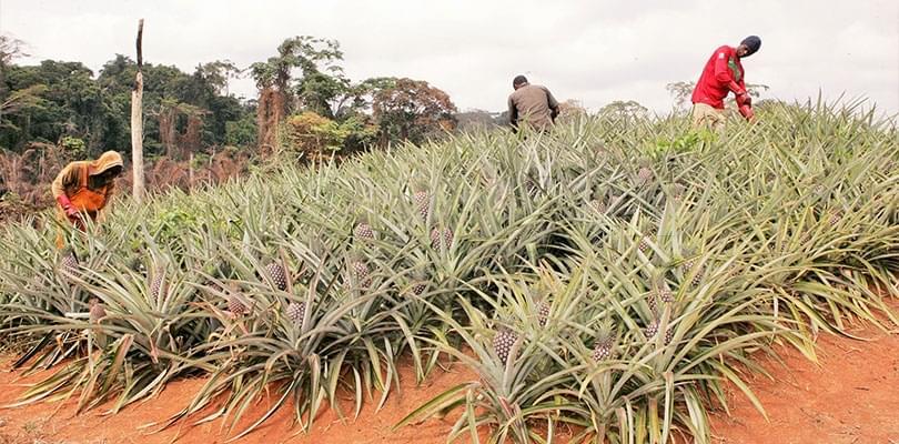 Image : Développement agricole: accompagnement assuré