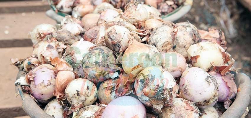 Image : Le prix de l'oignon en hausse