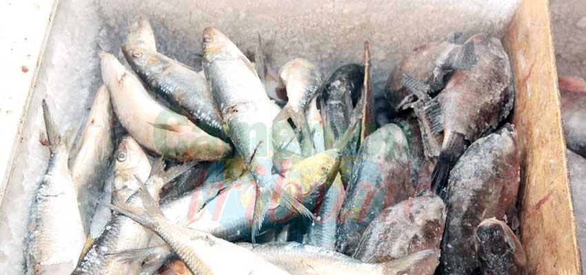 Riz-poisson: les prix restent les mêmes