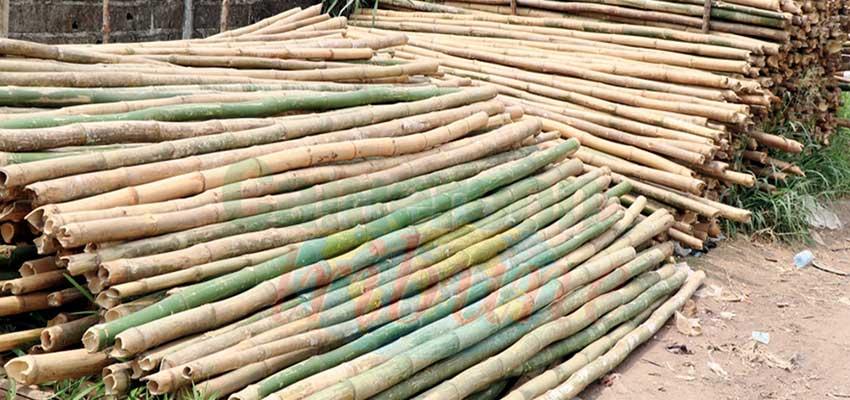 Bâtiment: la ruée vers le bambou de Chine