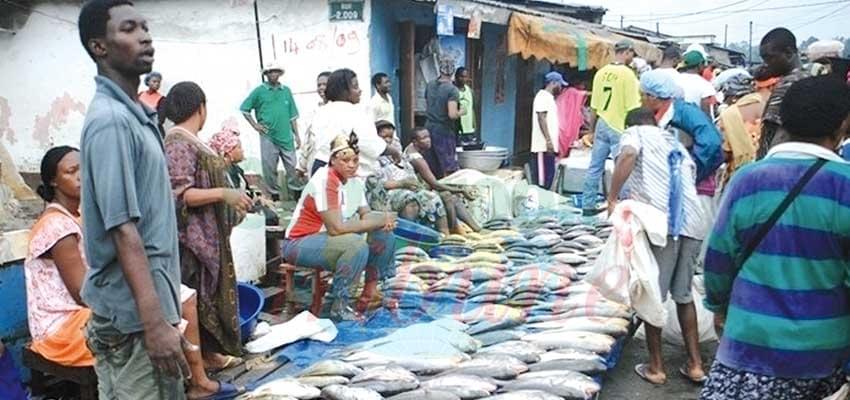 Image : Cameroon - Japan: Economic Cooperation On Upward Trend