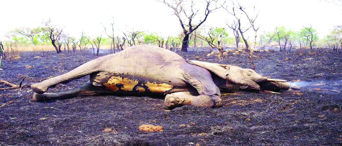 Fight Against Poaching: Government Steps Up Efforts