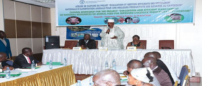Image : Improvement of Livestock Productivity: Gov't, Partners Reach Milestone