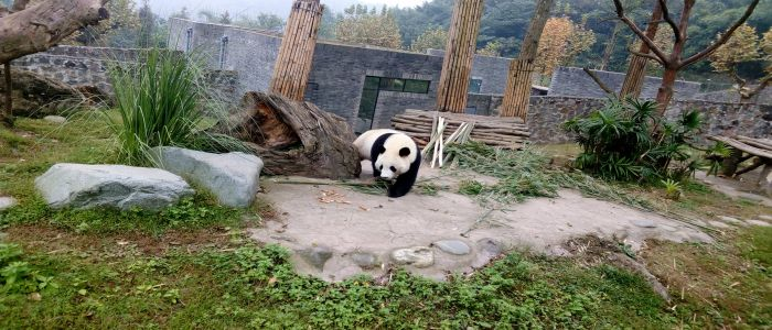 Image : Wildlife Conservation: Where 'Pandas' Fetch Fortunes!
