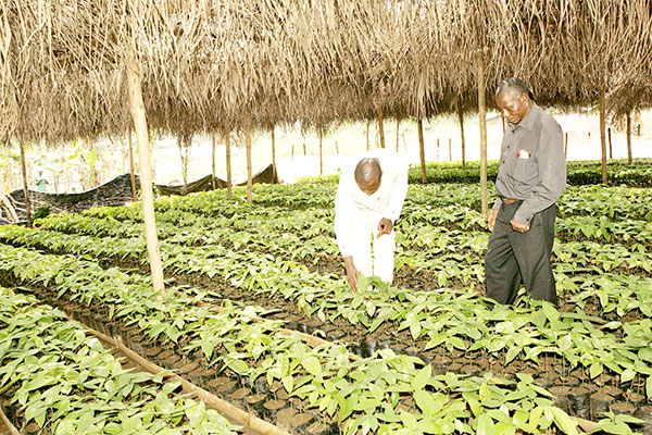 Agricultural Research: FCFA 320 Million To Foster Activities