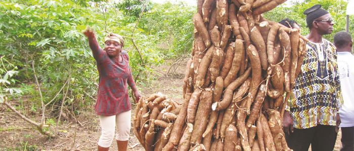 South West: PIDMA Reviews Assisted Cassava,Maize Projects