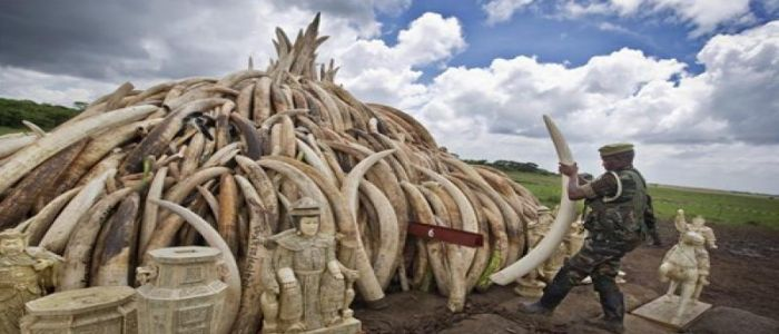 African Wildlife Conservation: China Offers 12 Billion FCFA To Fight Poaching