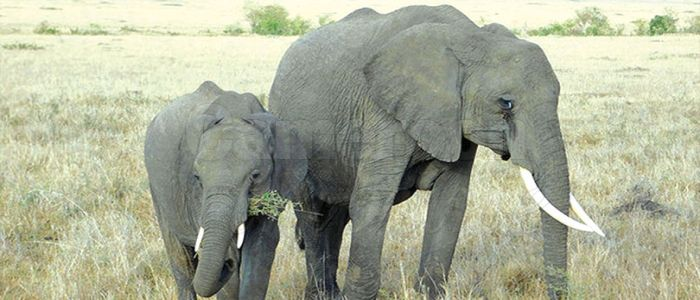 Anti-Poaching: UK Intensifies Lobby