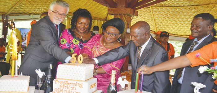 Food Security: IITA Cameroon Fetes Research Strides